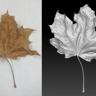 Bolton Works Maple Leaf (1)