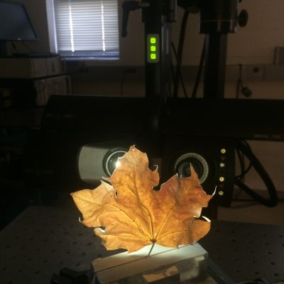 Bolton Works Maple Leaf (2)